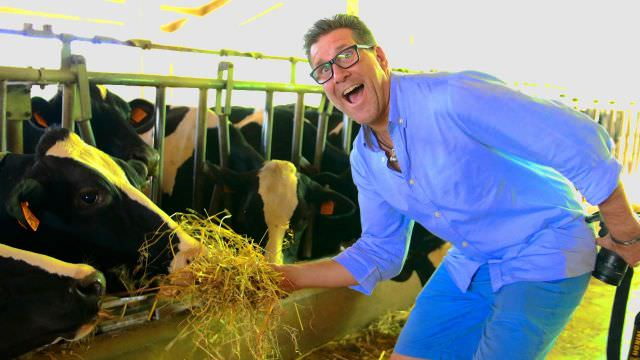 We visit a parmesan cheese producer with cows that are right on the farm