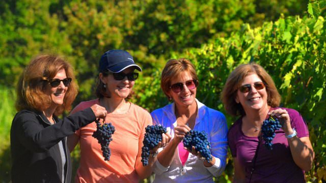 If the time is right, we love to get in the vineyards and harvest grapes with our winemaker friends in Tuscany!