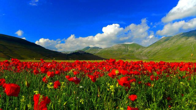 We will drive up to Castelluccio in the National Park of Sibillini to enjoy poppies field during the end of June