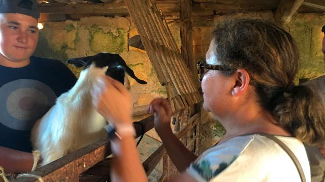 Our friend's farm has lots of surprises as they even raise their own goats to get milk and also make cheese from.
