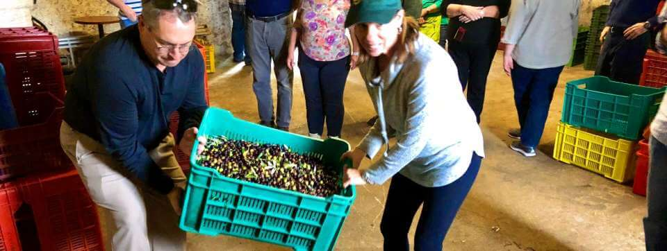 Bringing Olives to the Mill