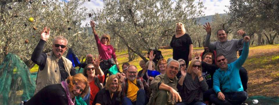 A day of fun harvesting olives